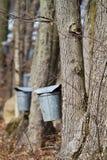 Sap buckets Royalty Free Stock Image