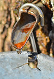 Sap flowing from a tap Royalty Free Stock Image