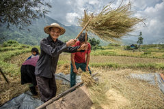 Sapa,越南2014年9月-13 -用手吹开米的农夫在Sapa越南乡区  库存照片
