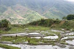 Sapa τομέων ρυζιού στοκ εικόνα