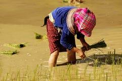 sapa Вьетнам людей Стоковое Изображение
