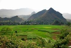 sapa риса поля Стоковые Фото