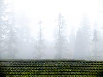 Sapa dolinny miasto w mgle w ranku Zdjęcie Royalty Free
