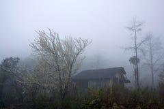 Sapa en la niebla Fotografía de archivo