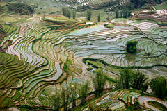 Sapa Landscape, Vietnam Stock Photos
