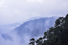 Sapa mountain fog. Fog is a complex atmospheric phenomenon. It is a visible mass consisting of cloud water droplets or ice crystals suspended in the air at or Royalty Free Stock Photo