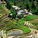 Sapa. Paddy fields, terraced rice culture, Sapa, Vietnam stock photos