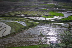 Sapa-Reis-Terrassenfeld, Sapa, LaoCai Stockfoto