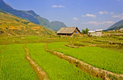 Sapa Rice crops Stock Image