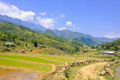 Sapa rice field with mountain view Royalty Free Stock Images
