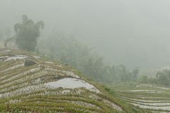 Sapa Rice Paddy Stock Photography