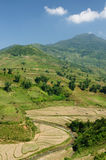 Sapa Rice Paddy Stock Image