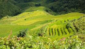 Sapa Rice plantation Royalty Free Stock Photography