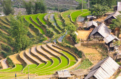 Sapa rice terraced fields Royalty Free Stock Image
