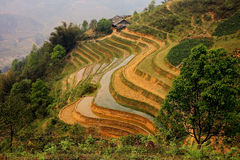 Sapa ricefield terraces. A scenic view of a traditional farm and its ricefield terraces in Sapa, North Vietnam royalty free stock images
