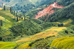 Sapa valley with rice field terraces Royalty Free Stock Photography