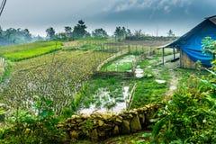 Sapa, Vietnam Immagini Stock Libere da Diritti