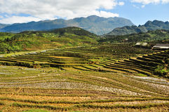 Sapa, vietnam Stock Photo