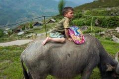 Sapa, Vietnam - April 25, 2018: Local kid rides water buffalo in Sapa. royalty free stock photos