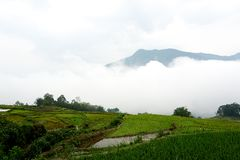 Sapa, Vietnam.- 22. Mai. 2019. Local people work at ricefield in lao chai sapa valey in Vietnam. Fogy Landscape of Ricefields in lao chai sapa valey in Vietnam stock photography