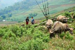 sapa Vietnam - 22 mai 2019 Lokalni ludzie pracuj? przy ricefield w lao Chai sapa valey w Wietnam zdjęcie stock