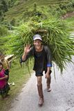 Hmong smiling walking carry the grass for animal food. SAPA, Vietnam – September 11, 2014 : Hmong hill tribe man smiling and walking carry the grass for royalty free stock photo