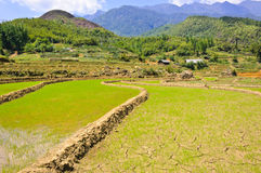 Sapa young rice field Stock Photography
