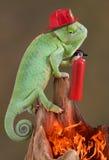 Sapador-bombeiro do Chameleon fotografia de stock royalty free
