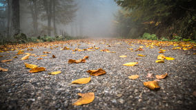 Sapanca, Τουρκία - 10 Οκτωβρίου 2013: Δρόμος που καλύπτεται με τα κίτρινα, πορτοκαλιά και κόκκινα φύλλα φθινοπώρου Στοκ Εικόνες