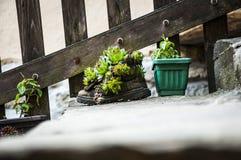 Sapata da flor Foto de Stock Royalty Free