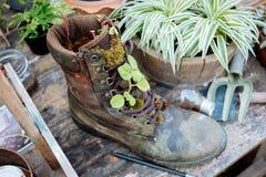 Sapata no jardim Fotografia de Stock