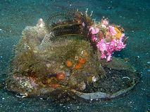 Sapata subaquática Fotografia de Stock