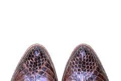 Sapatas luxuosas das mulheres Couro genuíno da serpente Objeto da forma foto de stock