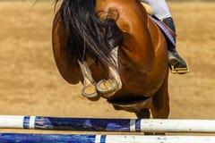 Sapatas Polos do metal de Rider Jump Rear Legs Closeup Hoofs do cavalo imagem de stock