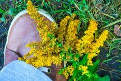 Sapatilhas de Brown e flor amarela foto de stock royalty free