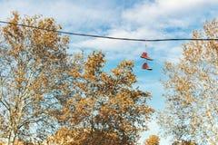 Sapatilhas gastas velhas que penduram no cabo em um dia bonito ensolarado do outono imagem de stock royalty free