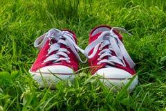 Sapatilhas na grama verde, caminhada da mola Imagens de Stock