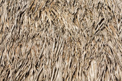 Sape grass roof, from Indigenous tribe house in Manaus, Brazil Stock Photos