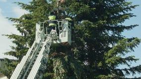 Sapeurs-pompiers disposant à couper les branches impeccables photo libre de droits