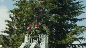 Sapeurs-pompiers disposant à couper les branches impeccables image stock
