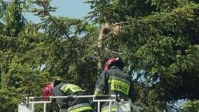 Sapeurs-pompiers disposant à couper les branches impeccables photo stock