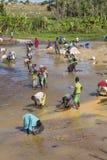 Saphirforscher in Madagaskar Stockfoto