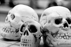 sapience de homo de crâne Photographie stock libre de droits