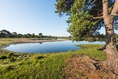 Sapin écossais et un étang naturel en été Photo libre de droits