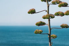 Sapin atlantique Photographie stock libre de droits