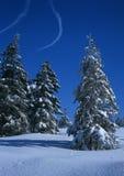 Sapin dans l'horizontal de l'hiver photographie stock libre de droits