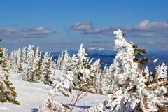 Sapin dans la neige Images stock