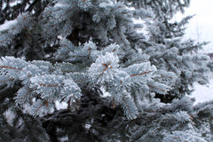 Sapin dans la neige Fond Usines d'iderable Image stock