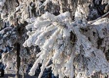 Sapin dans la neige pendant l'hiver Photographie stock