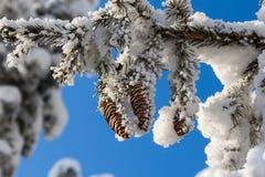 Sapin dans la neige pendant l'hiver Photos stock
